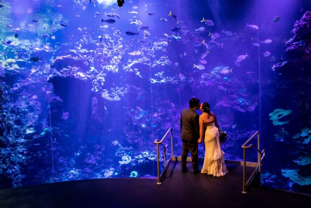 aquarium wedding photo shoot